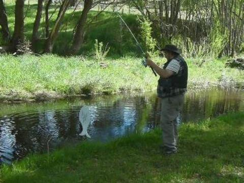Lou fishing for trout in the livingstone creek